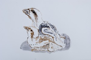 Drawing from the Glaslyn Osprey project residency.