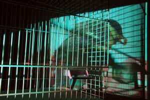 video projection and cage