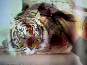 digital projection drawing workshop - tiger